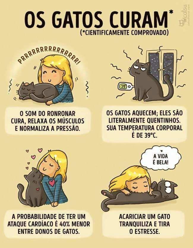gatos curam